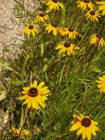 Roadside wild flowers Stock fotó