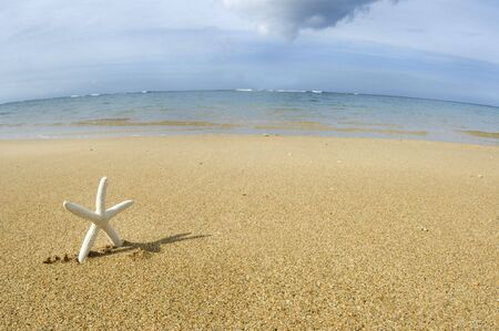echinoderm: White starfish standing up, looks like it is walking at the beach, enjoying the sand and sea.