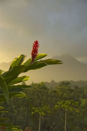 ginger flower plant: Red Ginger flower blossoming in Hawaii,mountains in the background. Kauai.Hawaii Islands. Vertical. Stock Photo