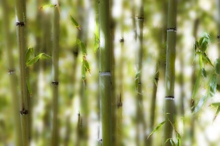 Selective depth of field on a collection of bamboos against white background. Stock Photo