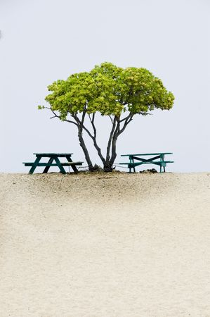 Tree and picnic tables at the beach. Two picnic tables under the tree, blue sea and white sandy beach. Copy space, vertical. Big Island of Hawaii.