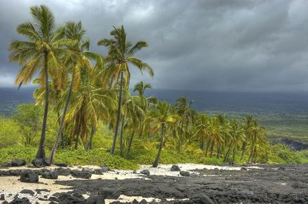 volcanic: Collection of tropical coconut trees along the coastline, white sand and black lava beach. Big Island of Hawaii.