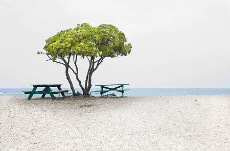 Tree and picnic tables at the beach. Two picnic tables under the tree, blue sea and white sandy beach. Copy space. Big Island of Hawaii.