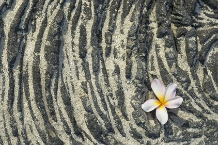 volcanic: Plumeria flower on sandy lava rock. Background, space for copy.
