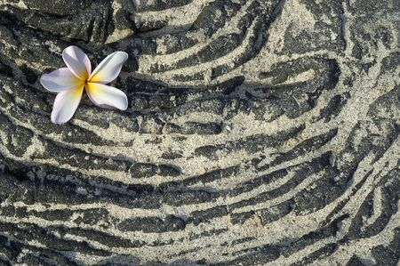 Plumeria flower on sandy lava rock. Background, space for copy.