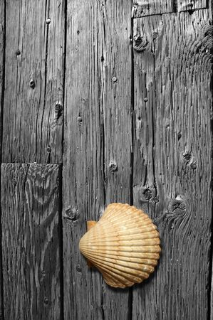 Sea shell in color sitting on a black and white, weathered hardwood floor.