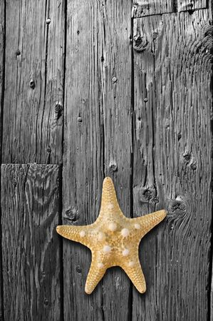 Starfish in color sitting on a black and white, weathered hardwood floor.