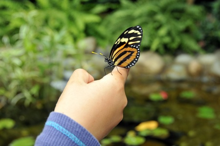 Butterfly landed on the hand at the garden. Stock Photo