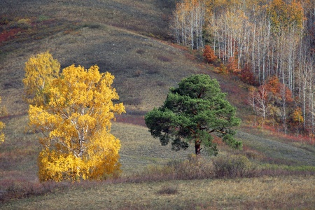 rally on Bashkiria autumn colors Stock Photo - 16115604