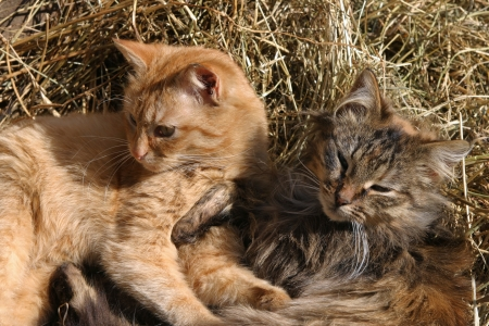happy cat on rustic barn Stock Photo