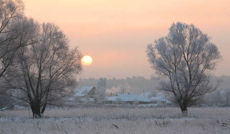sunrise frosty winter morning in the meadows photo