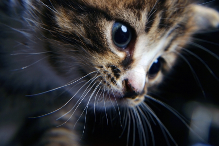 small but very beautiful, cute and clever kitten Stock Photo