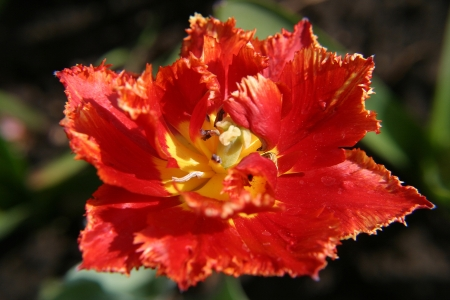 macro bloemen in de tuin Stockfoto