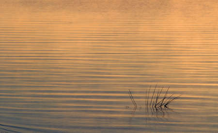 mirror on the water: beautiful and fascinating mirror water surface