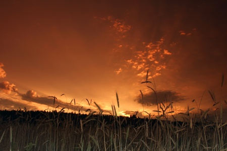 beautiful view of the sunset from the field Stock Photo