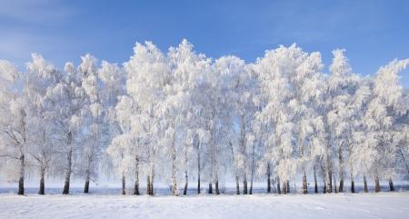 ロシアの美しい冬景色を歩く