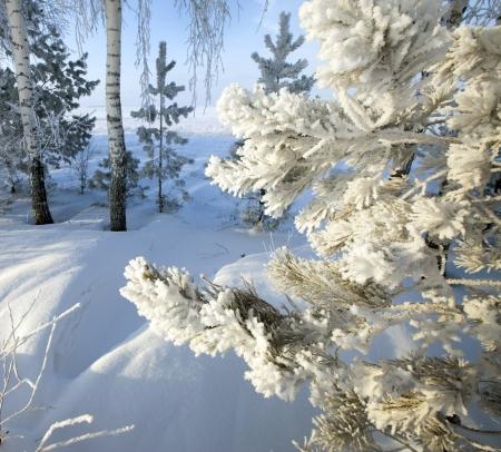 Loop door de prachtige winter scène in Rusland Stockfoto