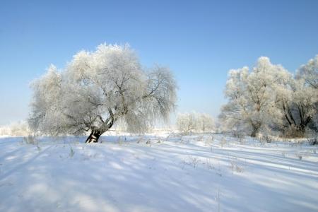 Prachtige winterse landschappen genomen op een heldere dag