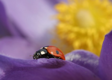 Beautiful spring purple wild flowers close up Stock Photo - 18200663