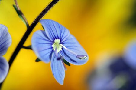 beautiful small blue flowers bloom in spring photo