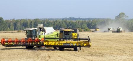 oogst van het graan in de enorme, luchtige Russische velden