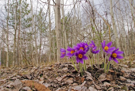Beautiful spring purple wild flowers close up Stock Photo - 18436544