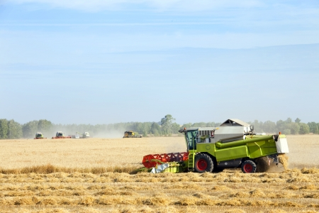 harvest of grain in the vast, airy Russian fields photo