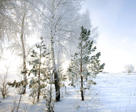 Walk through the beautiful winter scene in Russia photo