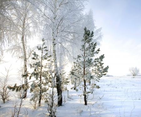 Walk through the beautiful winter scene in Russia photo