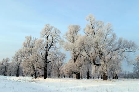 a long walk in nature snowy Russian winter Foto de archivo