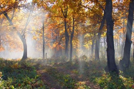 heel mooi landschap in de vroege mistige ochtend in Tatarstan Stockfoto