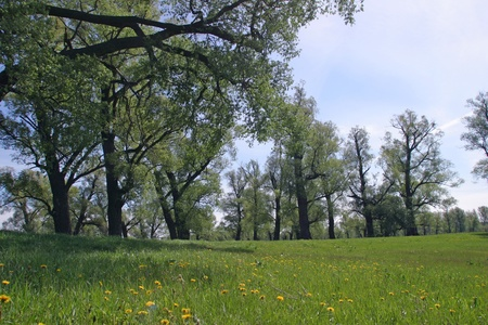 beautiful summer landscape in the green meadow photo