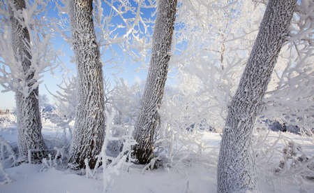 Winter walk in the snow-covered forest