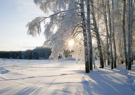 frostigen Wintermorgen in einem Wald mit Raureif verputzt
