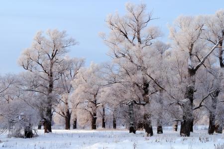 自然雪のロシアの冬の長い散歩