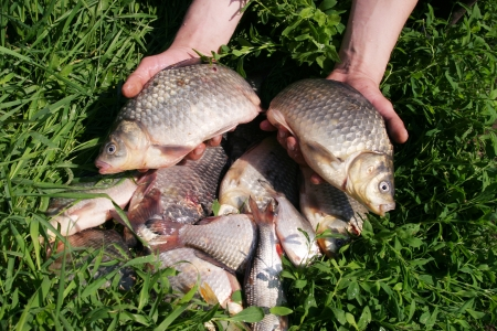 a lot of fresh fish on the grass photo