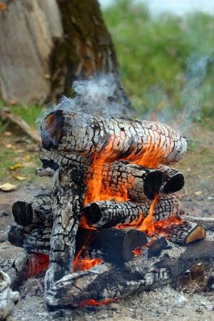 transformed: madera se quema muy bien y se transforma en carb?n