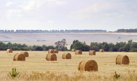many round bales of hay are in the fields photo