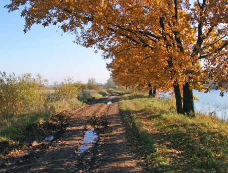秋の風景木や農村地域の道路