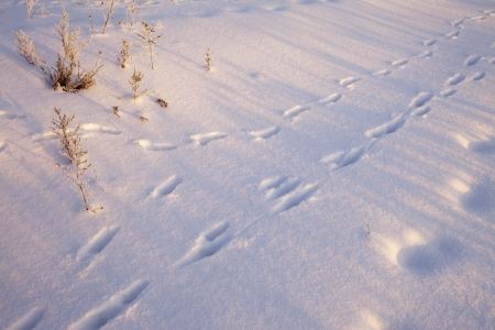 unusual and mysterious footprints in the snow Фото со стока