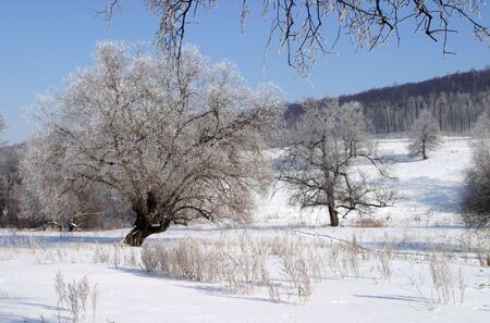 Beautiful winter landscapes taken on a clear day photo