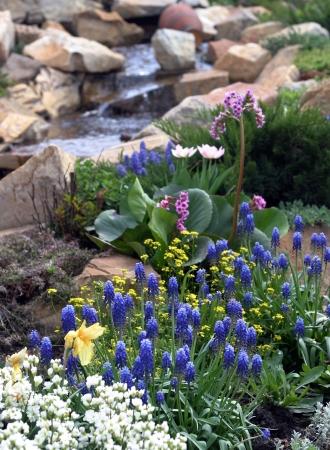 bloemen in de buurt van het water in de tuin