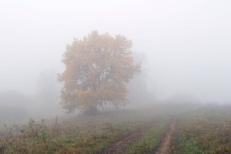 very beautiful landscape in the early misty morning in Tatarstan photo