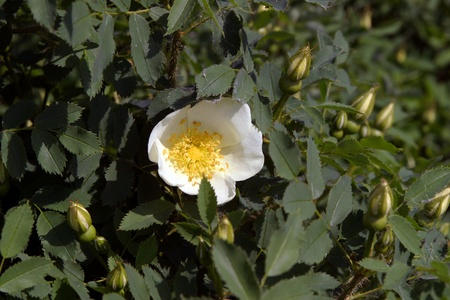 placer: beautiful blooming white flowers placer outdoors in spring