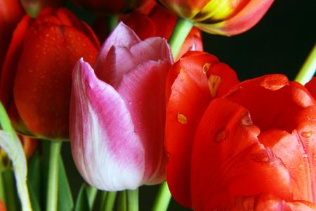 beautiful bouquet of spring flowers. studio shooting