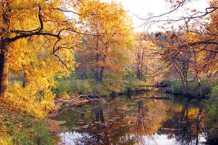 pacification: autumn landscape with a river and a forest