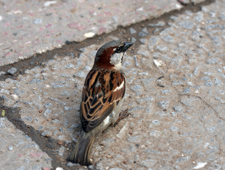 misses: sparrow sits on the road and misses