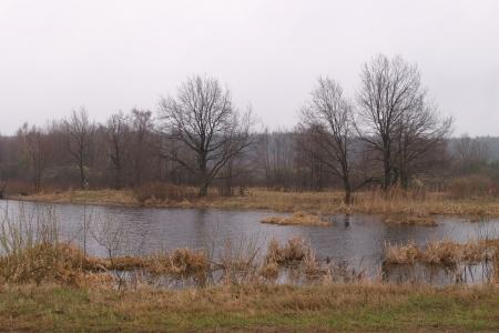 Early spring on the river near the forest on a misty morning photo