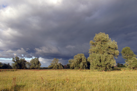 summer landscape in the meadow near the oak grove before the storm photo