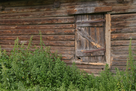 wall of an old abandoned log cabin and the door photo